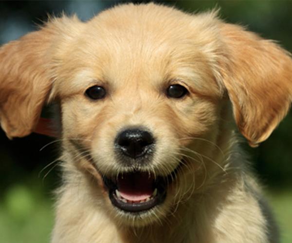 hundetoiletten-sponsoring